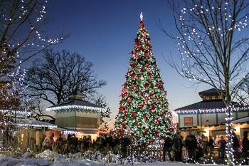 cinci zoo-bg-christmas tree